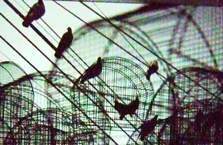 fugleline-detalj.jpg