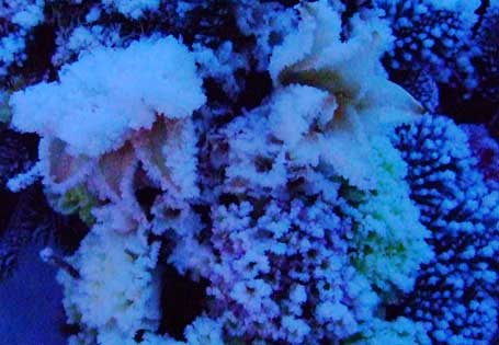 frozen-flowers-grave.jpg