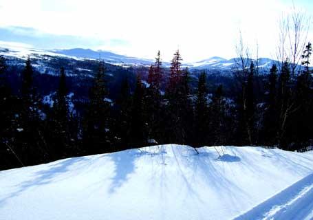 skog-skygger-panorama.jpg