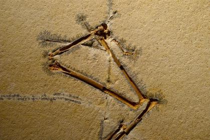Fossilet befinner seg i samme bergart som brukes i litografiske trykkplater. Foto: Oda Bhar.